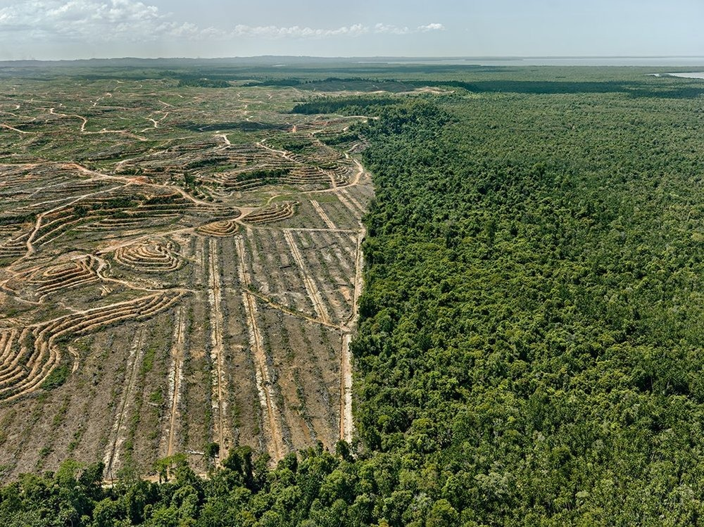 illegal deforestation